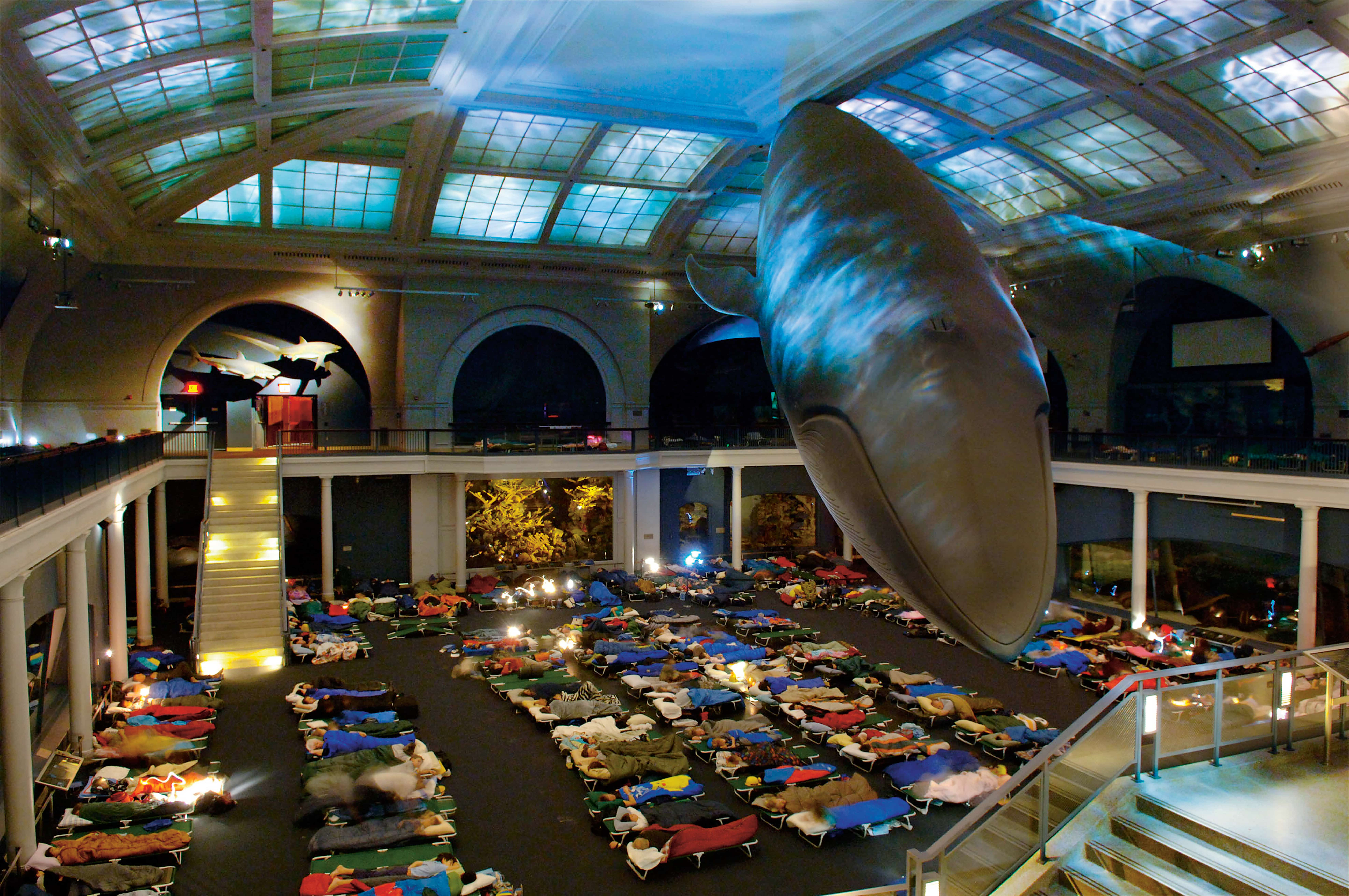 American Museum of Natural History Overnight Party for Kids