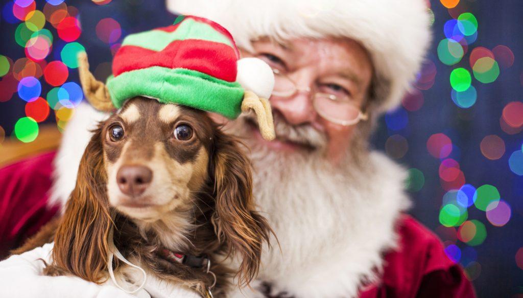 Pet Photos With Santa Nj Nj Family