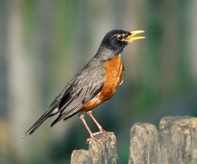 Birds of NJ