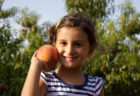 Pick-Your-Own Peaches in NJ
