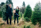 Where to Cut Your Own Christmas Trees in NJ