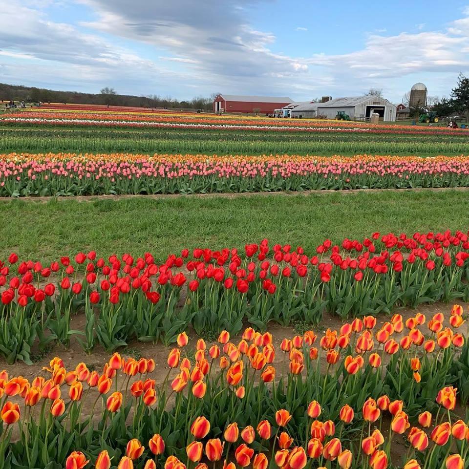 Flower Garden Nj
