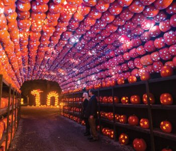 The Great Jack O'Lantern Blaze at Van Cortlandt Manor
