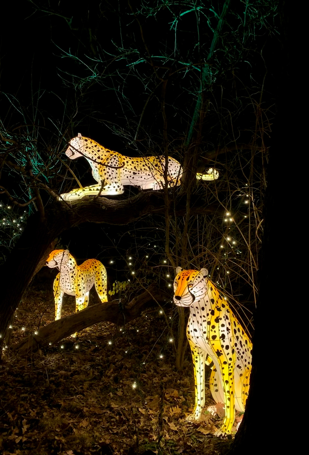 Bronx Zoo Christmas Lights 2020 There's Still Time to See The Bronx Zoo Holiday Lights   NJ Family