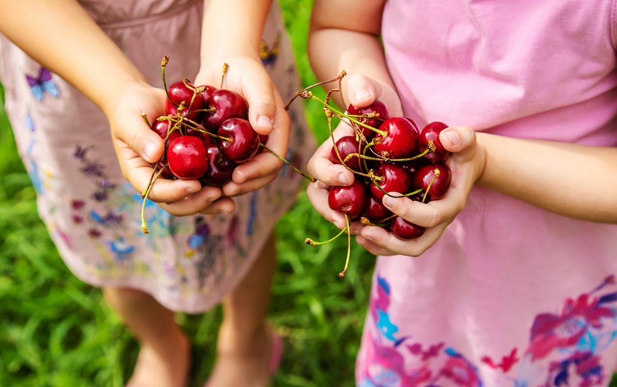 pick your own cherries nj