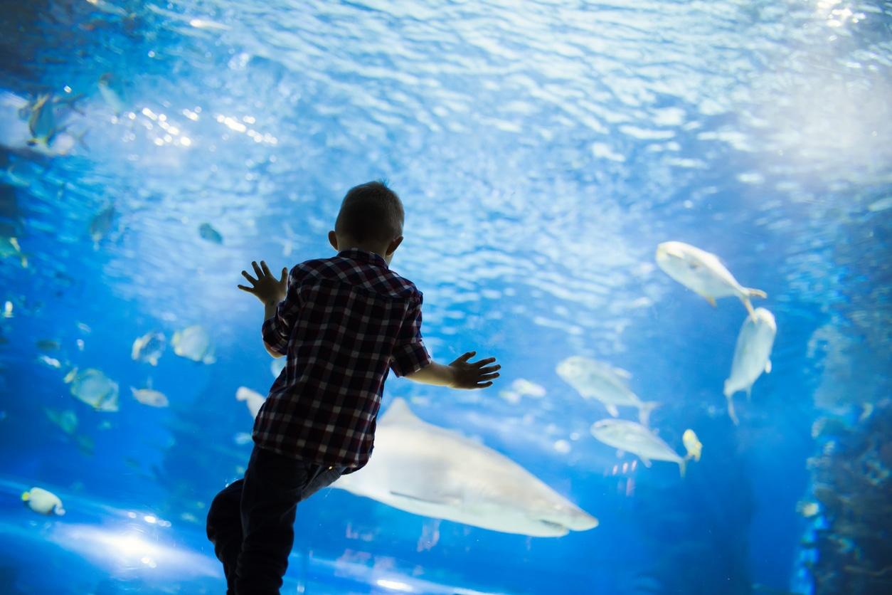 aquariums reopen